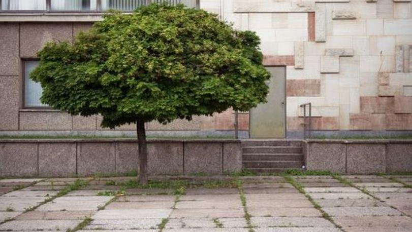 1 400 nouveaux arbres plante s a berlin