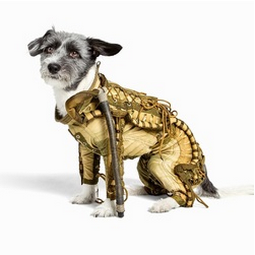 Combinaison spatiale chien 1