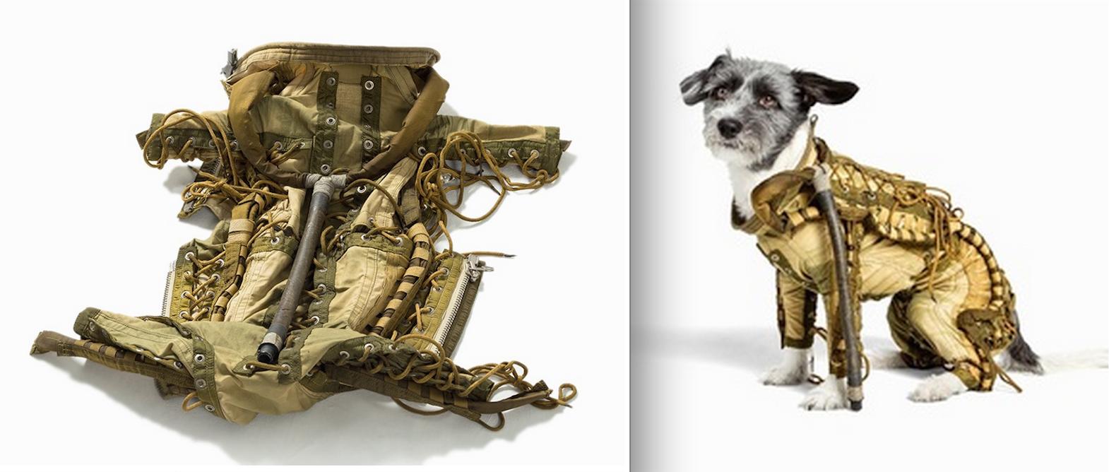 Combinaison spatiale chien