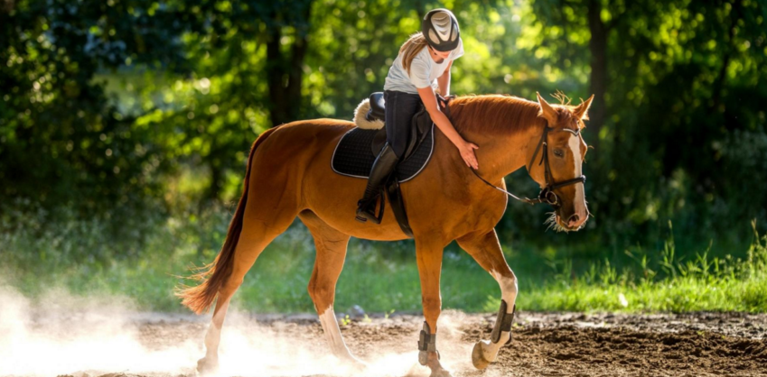 Équitation à Berlin