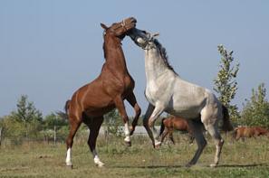 Pferdehof falkenberg